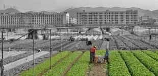 Urban Micro-Farming