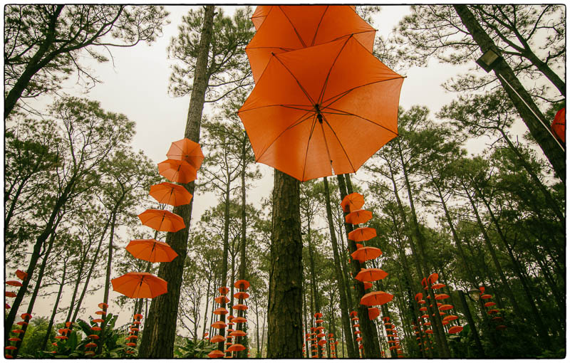 Tree Umbrellas