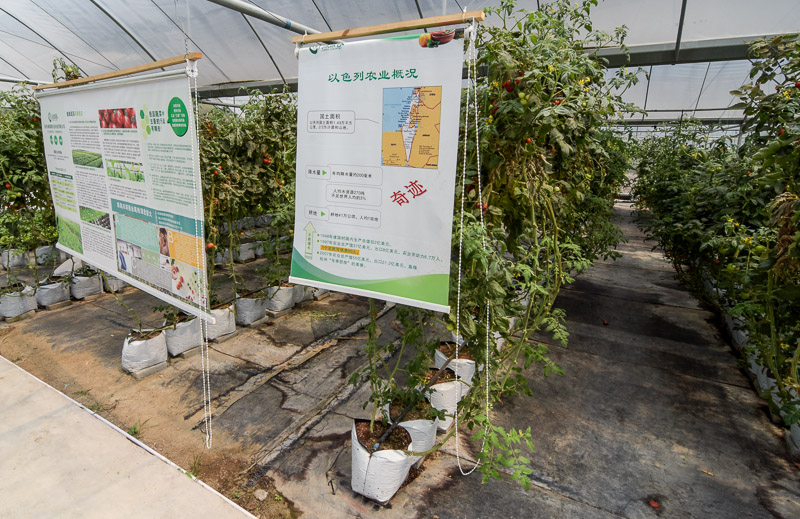 Organic Farm-15