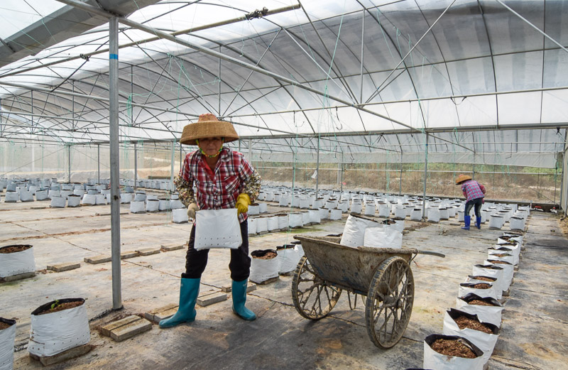 Organic Farm-16