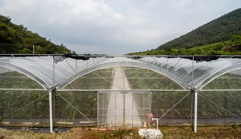 Organic Farm-19