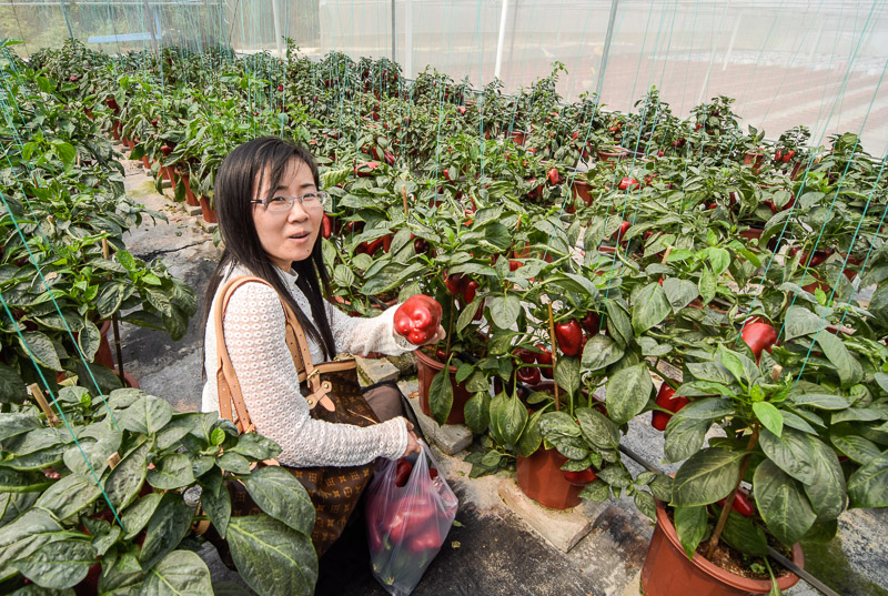Organic Farm-23