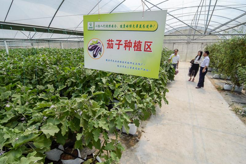 Organic Farm-24