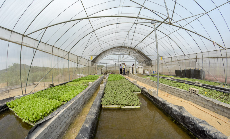 Organic Farm-3