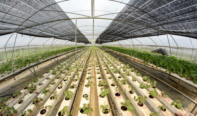 Organic Farm-5