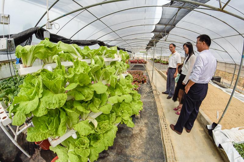 Organic Farm-7