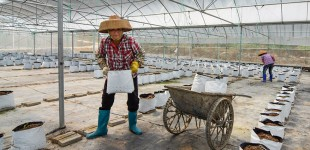 Organic Farming in China 4.15