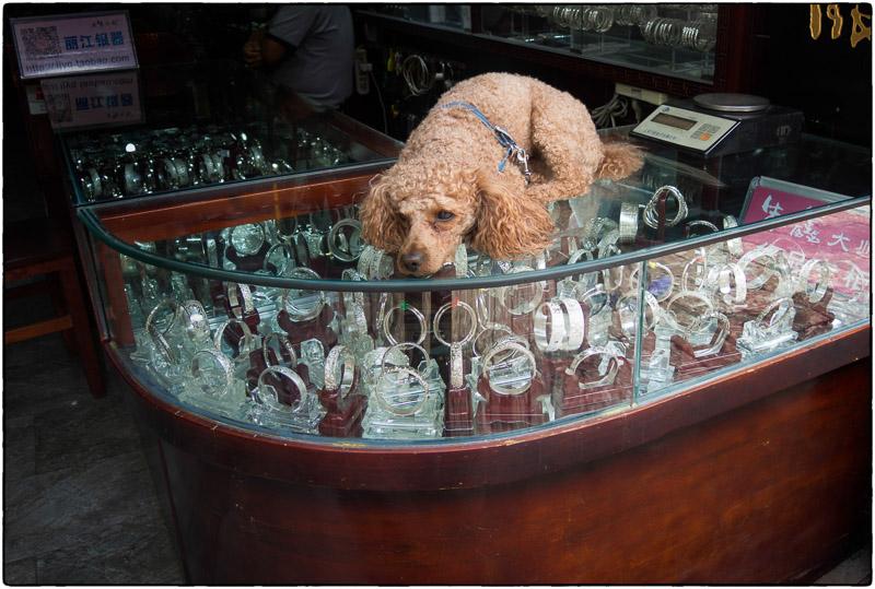 Lijiang Guard Dog