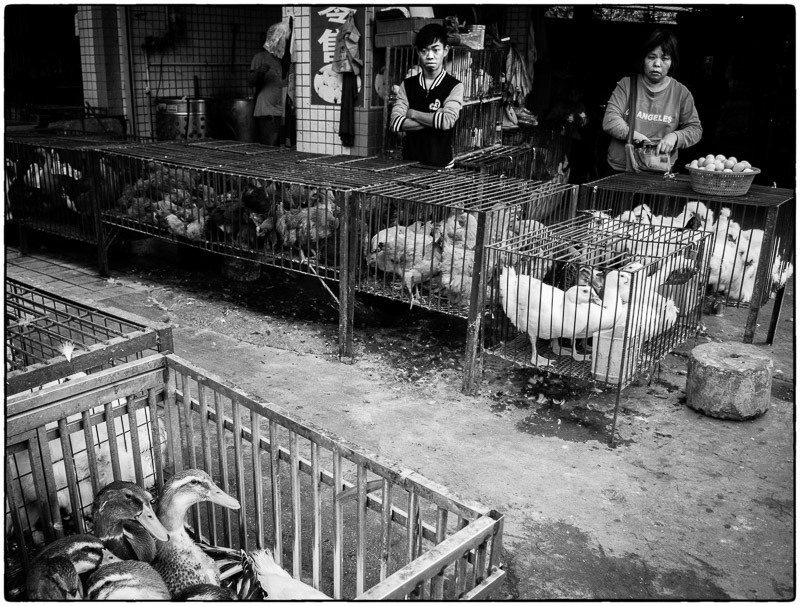 Poultry Sales