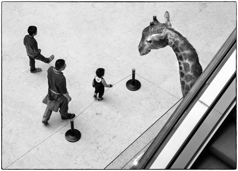Shenzhen Museum Giraffe