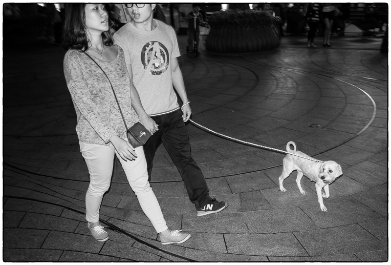 Shekou Dog Couple