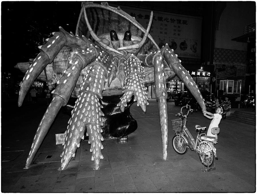 SK Pet Crab